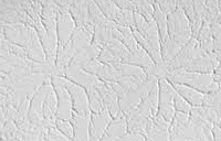 Slap Brush Drywall Texture