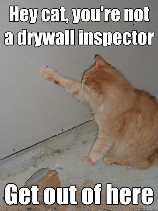 The Cat Inspector Dan The Drywall Man